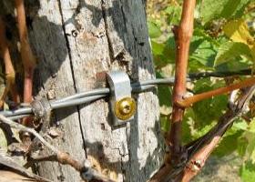 vine-wire